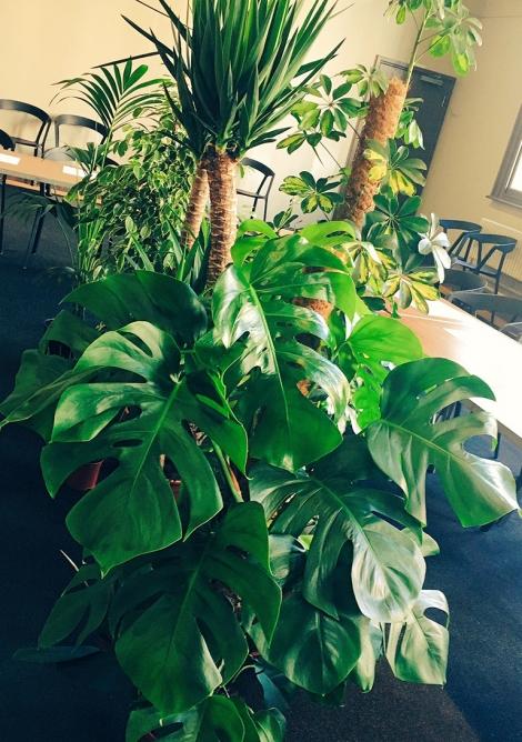 House Plant Doode Make